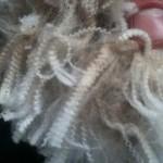 Mèches de laine. Les ondulations nous renseigne sur la finesse de la fibre