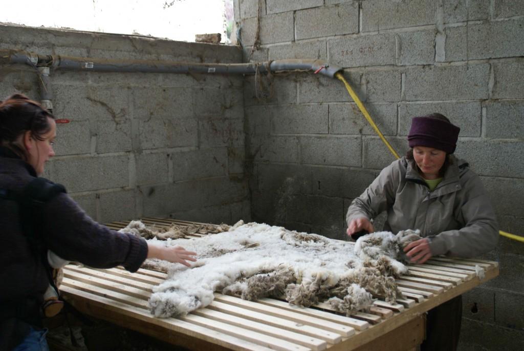 Tri de la laine sur une table ajourée